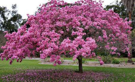 primavera  The Wallpaper Store Blog  Decoracin y tendencias con