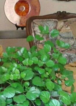 Elementos de vegetación