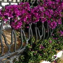 Recomendables plantas originarias de la zona, suelen adaptarse mejor y requieren menos mantenimiento.