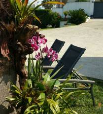 Detalles florales y mobiliario en áreas ajardinadas en casas de campo